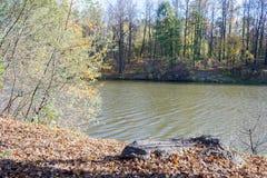 Ajardine em uma lagoa da cidade no dia ensolarado do outono Foto de Stock Royalty Free