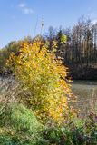 Ajardine em uma lagoa da cidade no dia ensolarado do outono Fotografia de Stock Royalty Free