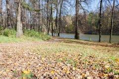 Ajardine em uma lagoa da cidade no dia ensolarado do outono Imagem de Stock