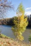 Ajardine em uma lagoa da cidade no dia ensolarado do outono Imagens de Stock