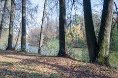 Ajardine em uma lagoa da cidade no dia ensolarado do outono Imagens de Stock Royalty Free