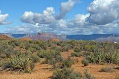 ajardine en el parque nacional de Grand Canyon, Arizona, Estados Unidos imagen de archivo