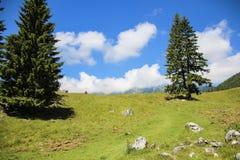 Ajardine en la colina, con la hierba verde, los árboles y el cielo azul Fotos de archivo