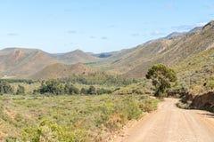 Ajardine entre Hoeko e Ladismith com o Swartberg na parte traseira Fotos de Stock