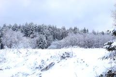 Ajardine a estrada na floresta do inverno com coberto de neve Fotografia de Stock
