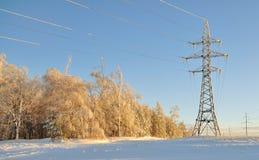 Ajardine fios do polo e da alta tensão perto da floresta Imagem de Stock