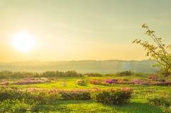 Ajardine flores cor-de-rosa na montanha e no sol do verão Imagem de Stock Royalty Free