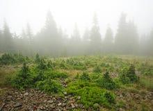 Ajardine a floresta da montanha em um dia chuvoso coberto no embaçamento Fotografia de Stock Royalty Free