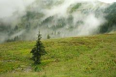 Ajardine a floresta da montanha em um dia chuvoso coberto no embaçamento Foto de Stock