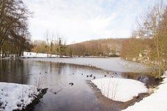 Ajardine a floresta invernal, nevado - Elancourt, França Imagem de Stock Royalty Free