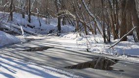 Ajardine fluxos de córrego da floresta na natureza da neve da floresta do inverno Imagem de Stock