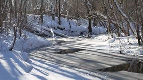 Ajardine fluxos de córrego da floresta na natureza da neve da floresta do inverno Imagem de Stock Royalty Free