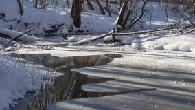 Ajardine fluxos de córrego da floresta na neve da natureza da floresta do inverno, Imagem de Stock Royalty Free