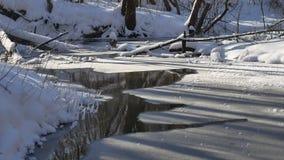 Ajardine fluxos de córrego da floresta na neve da natureza da floresta do inverno, Foto de Stock Royalty Free