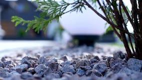 Ajardine formal, jardim da frente é jardim belamente projetado Foco seletivo video estoque