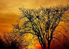 Ajardine a foto das árvores no por do sol no outono profundo Fotografia de Stock