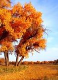 Ajardine a foto de golen as folhas e árvores caídas Fotografia de Stock Royalty Free