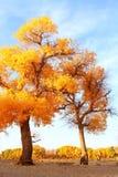 Ajardine a foto de golen as folhas e árvores caídas Fotos de Stock Royalty Free