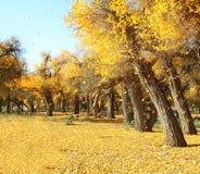 Ajardine a foto de golen as folhas e árvores caídas Foto de Stock Royalty Free