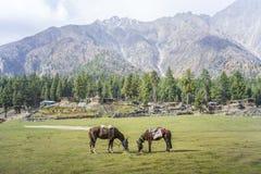Ajardine a foto de prados feericamente, Gilgit, Paquistão Imagem de Stock Royalty Free
