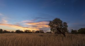 Ajardine a foto de uma árvore inoperante da silhueta no por do sol com SK azul Foto de Stock Royalty Free