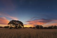 Ajardine a foto de uma árvore inoperante da silhueta no por do sol com SK azul Imagem de Stock Royalty Free