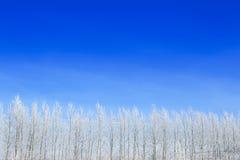 Ajardine a foto do as árvores cobertas na neve fresca Imagem de Stock Royalty Free