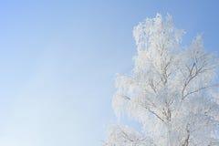 Ajardine a foto do as árvores cobertas na neve fresca Fotos de Stock Royalty Free