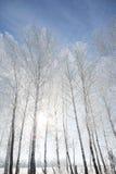 Ajardine a foto do as árvores cobertas na neve fresca Imagens de Stock Royalty Free