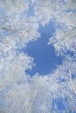 Ajardine a foto do as árvores cobertas na neve fresca Imagens de Stock