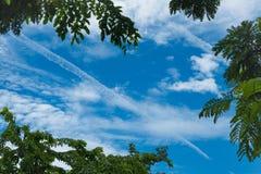 Ajardine a foto do céu acima das partes superiores de um grupo de árvores Imagens de Stock