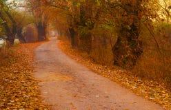 Ajardine a foto que mostra o parque colorido no ensolarado Imagem de Stock