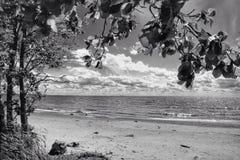 Ajardine a fotografia preto e branco da costa e da árvore Foto de Stock