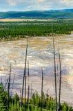 Ajardine a ideia da área prismático grande com árvores secas, Yellowsto Imagens de Stock Royalty Free