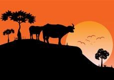 Ajardine a ideia da noite do campo com em fundo do pôr do sol ilustração do vetor