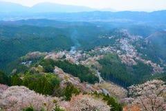 Ajardine a ideia dos milhares de árvores de cereja que florescem na montagem Yoshino em Nara, Japão Fotografia de Stock Royalty Free