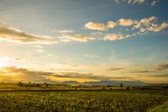 Ajardine a ideia o do campo em Tailândia Foto de Stock