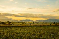 Ajardine a ideia o do campo em Tailândia Imagens de Stock Royalty Free