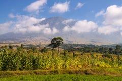 Ajardine a ilha do vulcão no fundo, Indonésia de Lombok Rinjani Fotos de Stock Royalty Free