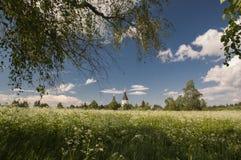 Ajardine, iluminado por el sol con las vistas del prado Foto de archivo libre de regalías
