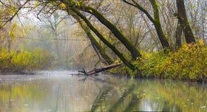 Ajardine a imagem com névoa sobre o rio ou o lago e árvores verdes Foto de Stock