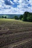 Ajardine a imagem da exploração agrícola agrícola com as colheitas plantadas novas em S Fotos de Stock Royalty Free