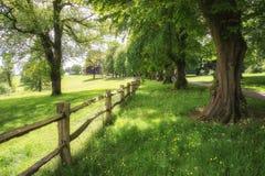 Ajardine a imagem da floresta verde luxúria vibrante bonita da floresta Foto de Stock