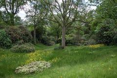 Ajardine a imagem da floresta verde luxúria vibrante bonita da floresta Imagens de Stock