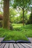 Ajardine a imagem da floresta verde luxúria vibrante bonita da floresta Fotografia de Stock