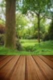 Ajardine a imagem da floresta verde luxúria vibrante bonita da floresta Fotografia de Stock Royalty Free