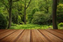 Ajardine a imagem da floresta verde luxúria vibrante bonita da floresta Fotos de Stock