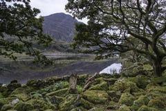Ajardine a imagem da montanha refletida no lago imóvel no verão mo Fotos de Stock