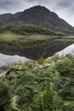 Ajardine a imagem da montanha refletida no lago imóvel no verão mo Fotografia de Stock