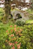 Ajardine a imagem da ponte medieval no ajuste do rio em c inglês Imagem de Stock Royalty Free
